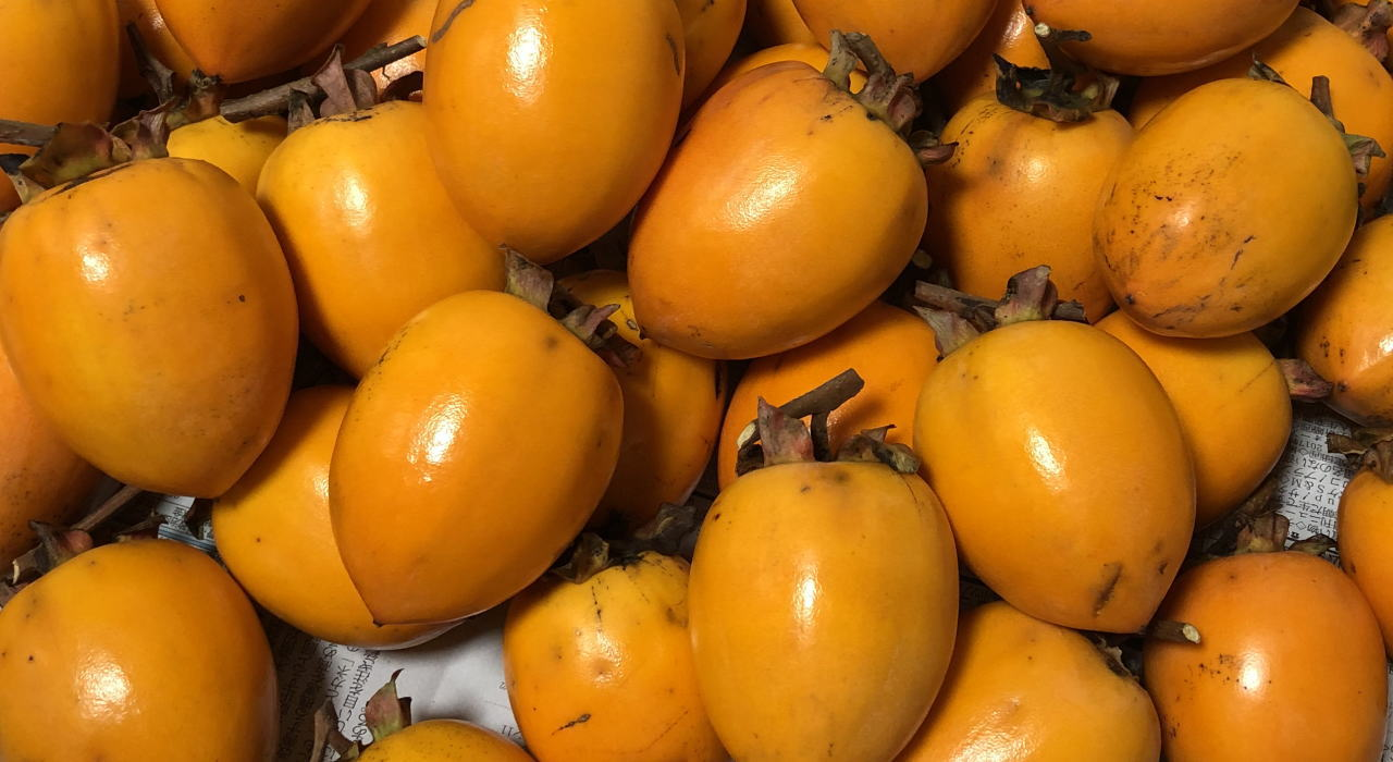 柿の渋抜き