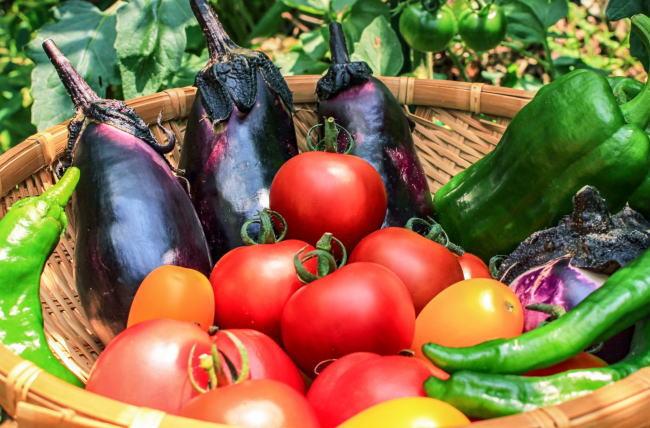 果菜類の保存方法