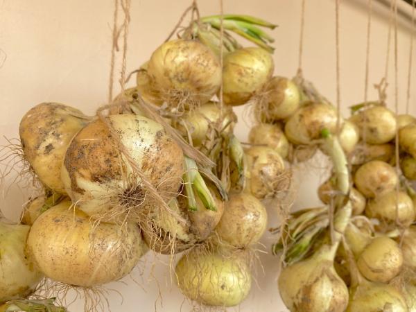 玉ねぎの常温保存